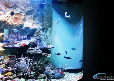 Aquarium marin cylindre